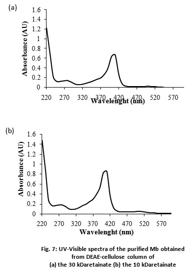 Purification, Peptide Mapping and Spectroscopic Characterization of