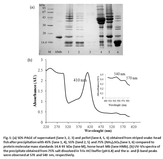 Purification, Peptide Mapping and Spectroscopic