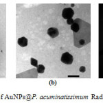 Fig. 3.  TEM patern of AuNPs@P. acuminatissimum Radlk leaves extract