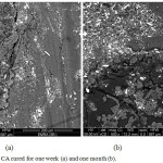 Figure 12: SEM for pure CA cured for one week (a) and one month (b).