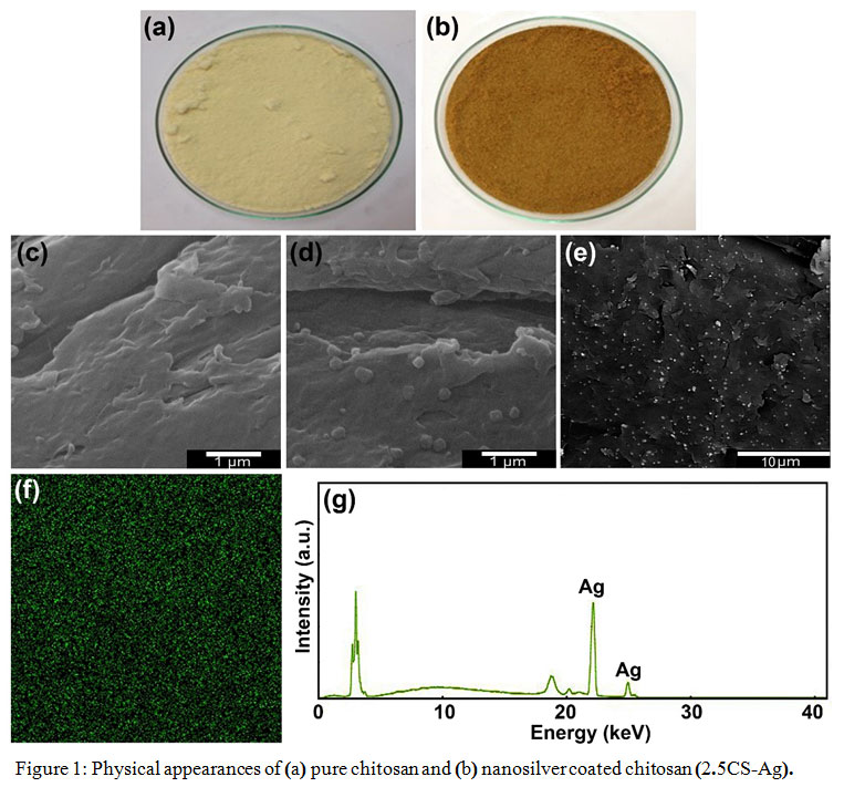 Development of Antimicrobial Hybrid Materials from